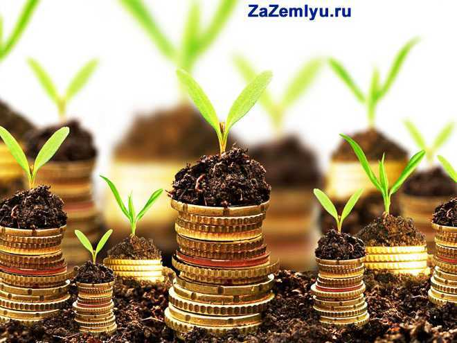 Из земли растут монетки
