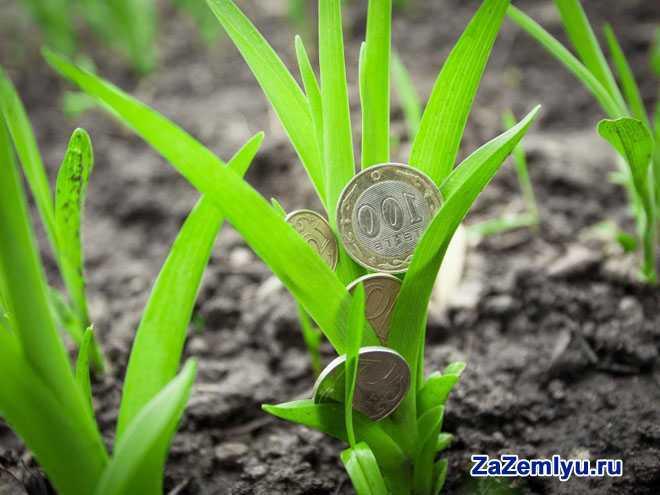 На травке растут монетки