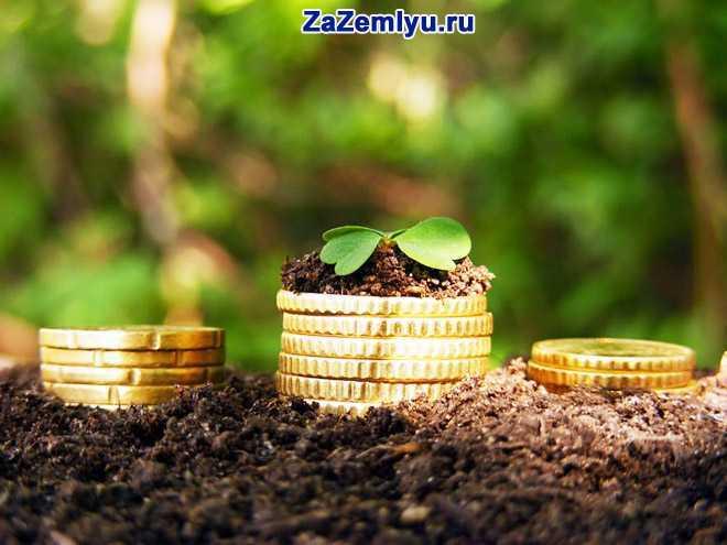 Монеты лежат на земле