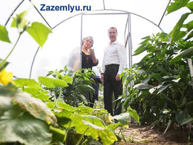 Женщина показывает урожай из своей теплицы