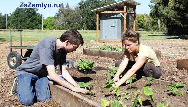 Семейная пара сажает рассаду на грядке