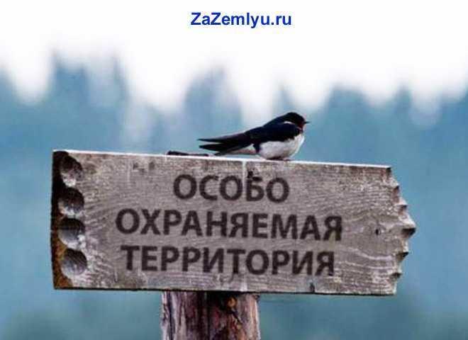 """На табличке """"Особо охраняемая зона"""" сидит птичка"""