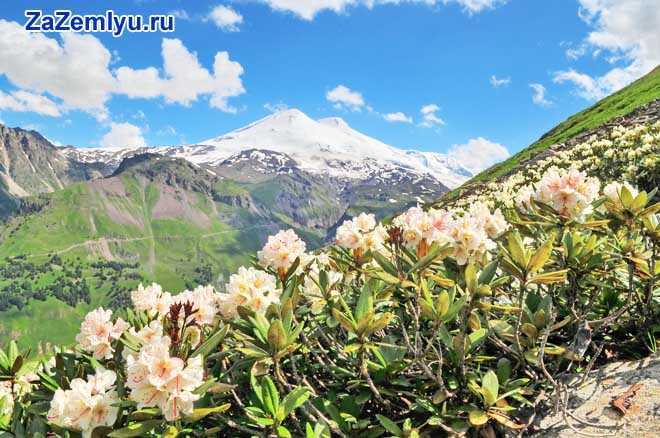 Цветы в горной долине