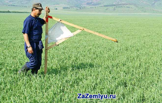 Фермер стоит в поле