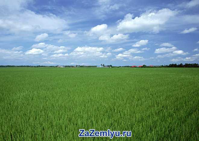 Зеленое поле, синее небо