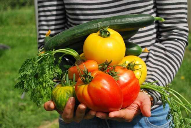 Девушка держит в руках овощи с огорода