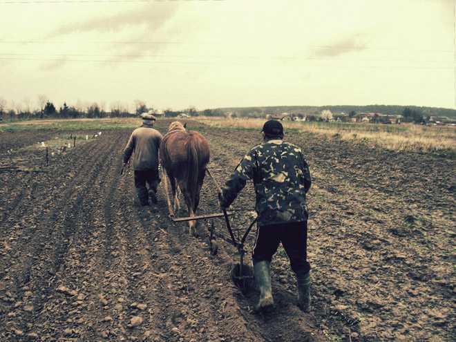 Двое мужчин вспахивают землю под посадку урожая