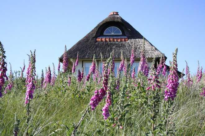 Дикорастущие цветы, дачный домик