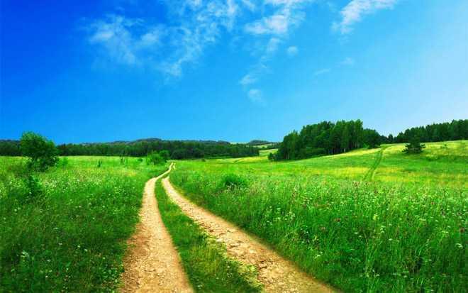 Тропинка, зеленый луг, солнечная летняя погода