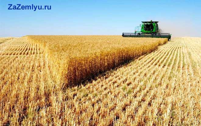 Трактор собирает урожай злаковых культур