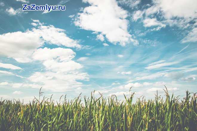 Облачное небо, травка зеленая