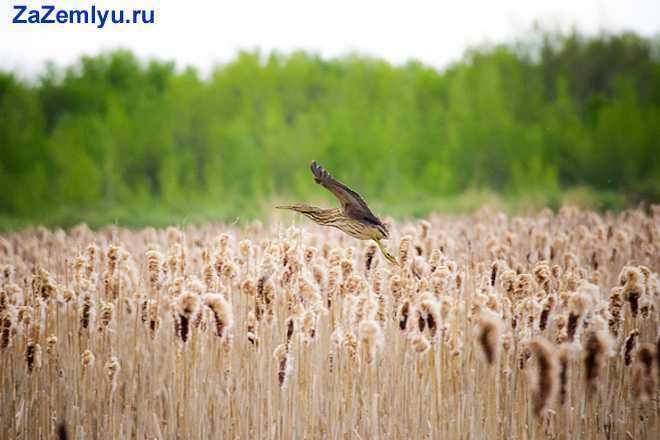 Птичка летает над полем