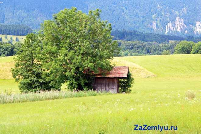 На поле стоит дерево и старый гараж