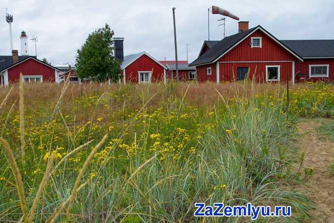 Трава, дачные дома