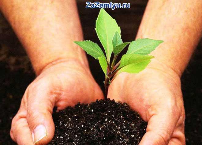 В руках человека росточек с землей
