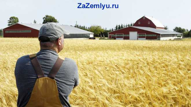Фермер смотрит на поле с пшеницей
