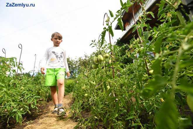 Мальчик идет по тропинке вдоль рассады