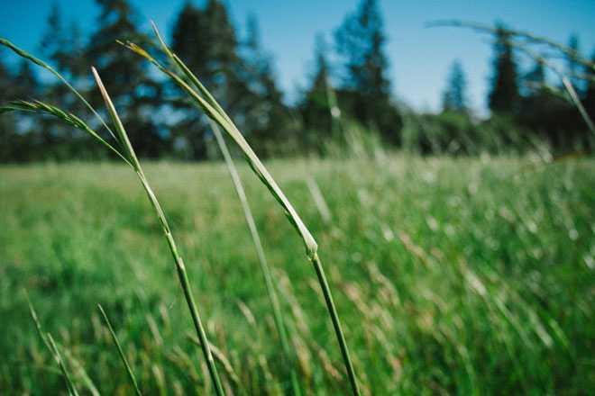 Летняя трава, солнечная погода