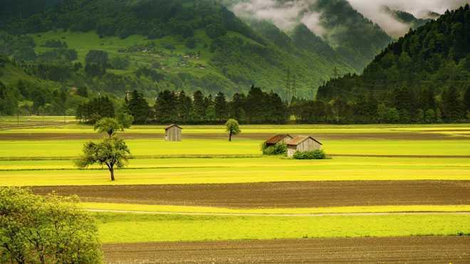 Золотистое поле, природа, домик