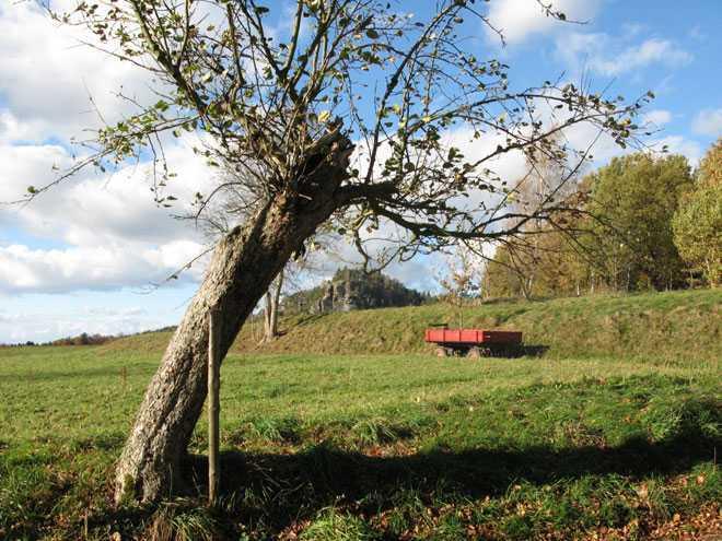 Дерево, земельный участок, домик