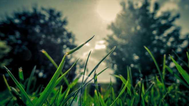 Зеленая трава, деревья