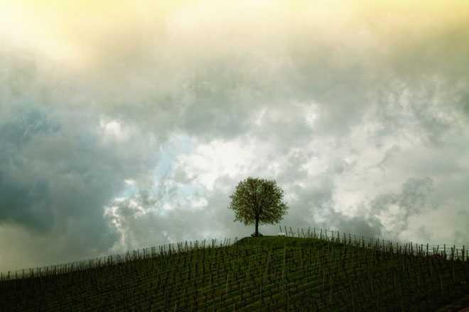Поле с урожаем, дерево