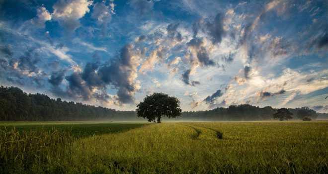 Дерево, поле, облака