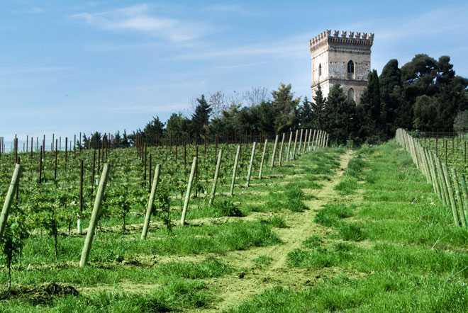 Башня, виноградник