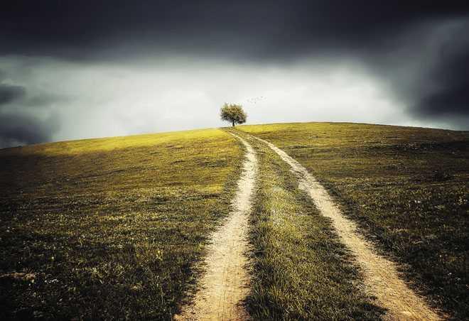 Тропинка в поле, дерево
