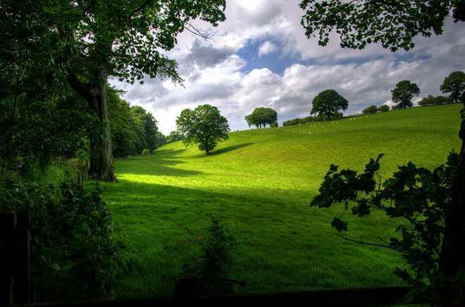 Зеленые луга, деревья, лето