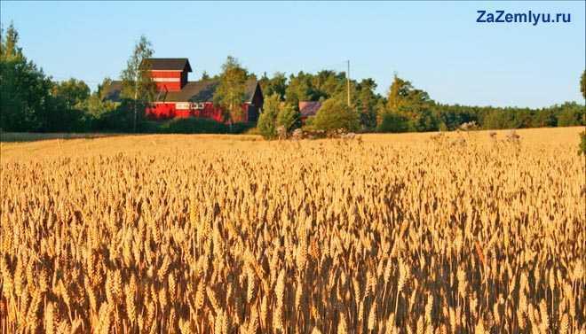 Урожай злаковых культур