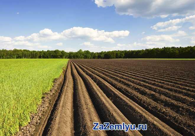 Борозды под посадку урожая