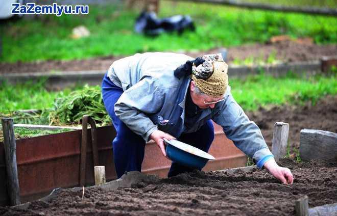 Пенсионерка сажает рассаду в огороде