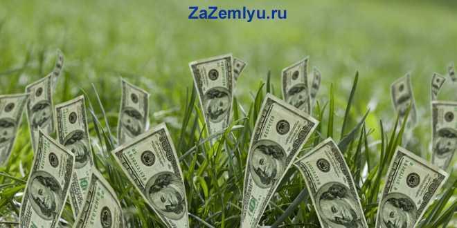 Доллары растут в траве