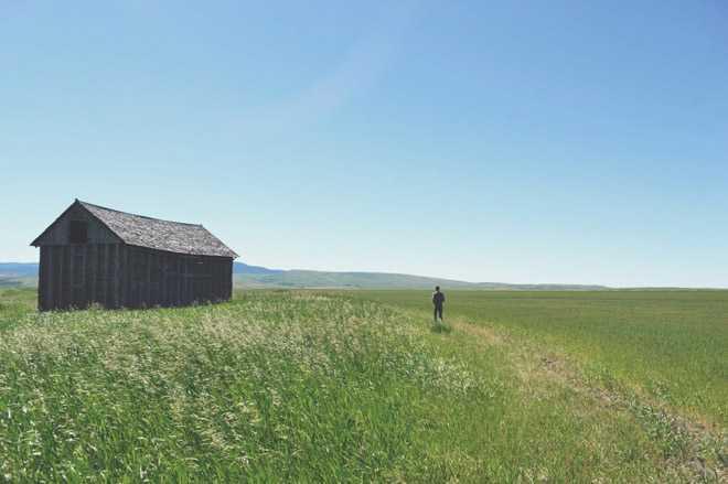 Человек в поле, деревянный сарай