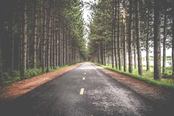 Дорога, деревья,  трасса