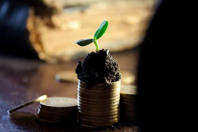 Монеты, росточек