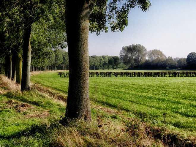 Деревья, поле