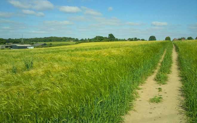 Зеленое поле, тропа, ферма