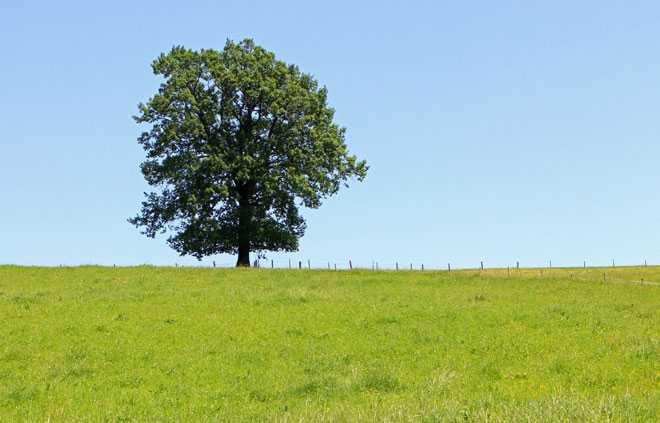 Дерево с пышной кроной стоит в поле