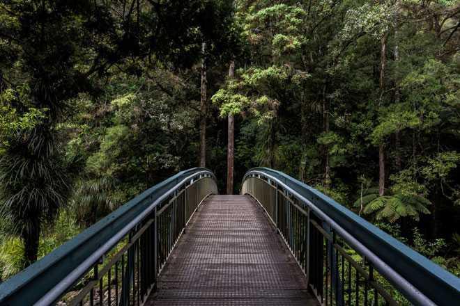 Мост через реку в лесу