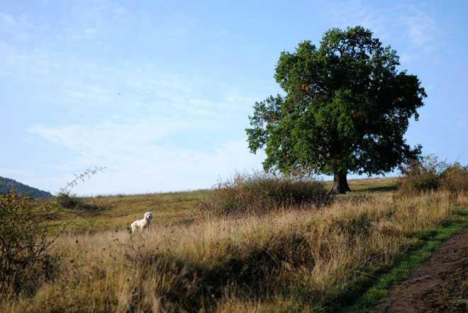Собака гуляет на природе