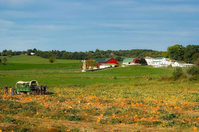 Урожай тыквы, ферма
