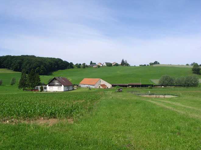 Дачные дома, огород с урожаем
